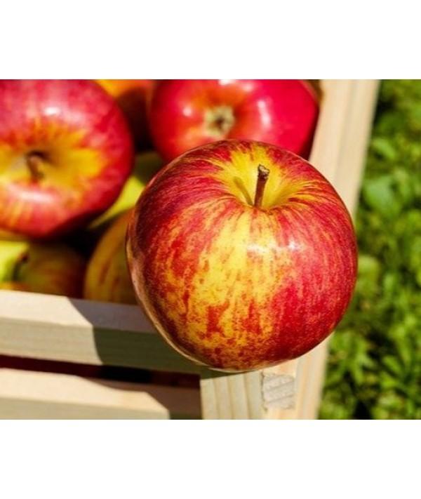 Piure de mere